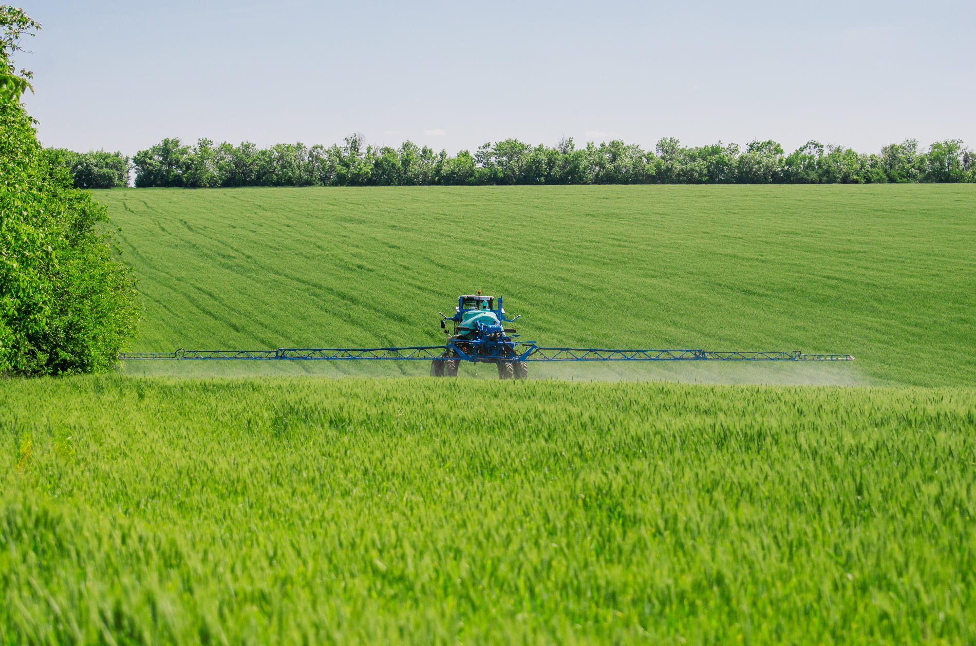 Agricultural sprayers, spray chemicals on young wheat.